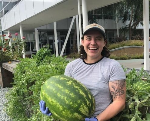 Google Grown Watermelons